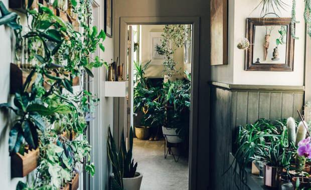 Домашний сад: 7 идей по размещению растений в интерьере