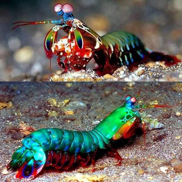 Природа - лучший художник: 40 животных неожиданной расцветки - 24