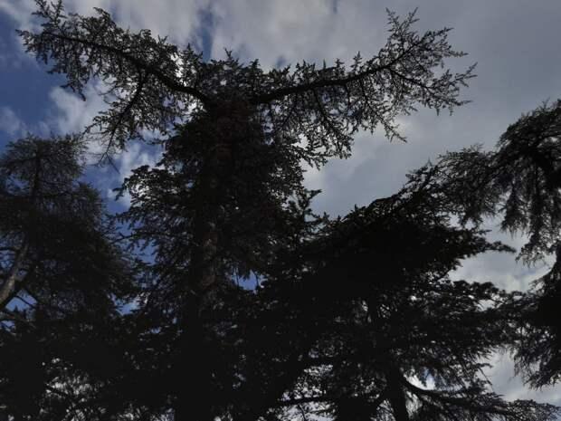 Гидрометцентр сообщил о состоянии загрязнения воздуха в Крыму