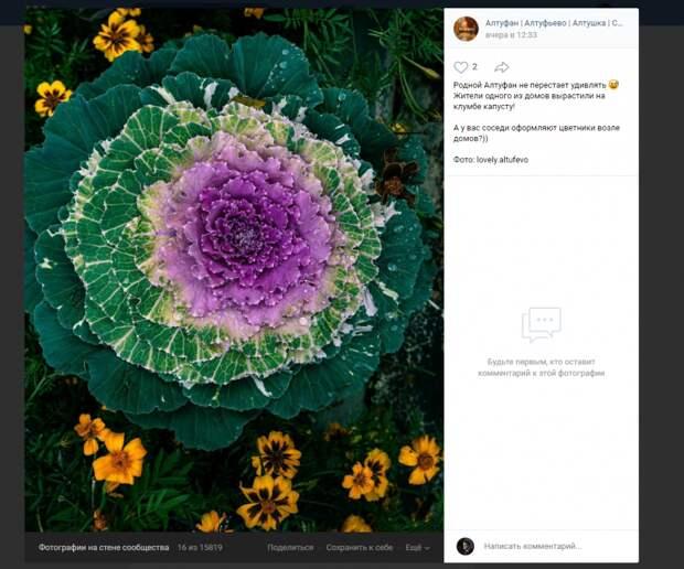 Фото дня: во дворах Алтуфьева выросла разноцветная капуста