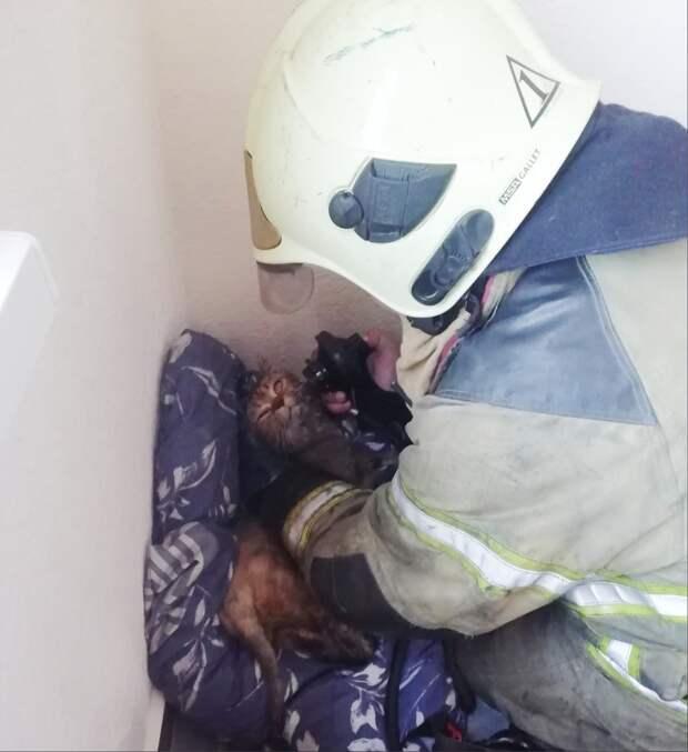 Мужчину и кошку спасли из загоревшейся квартиры в Ижевске