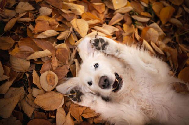 Самые счастливые собаки в мире