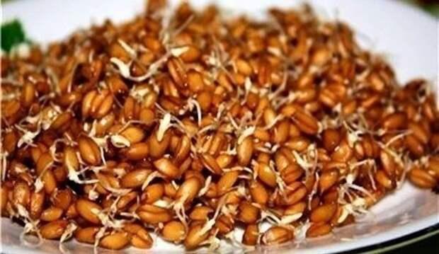 ХИЖИНА ЗДОРОВЬЯ. Проросшая пшеница лечит весь организм