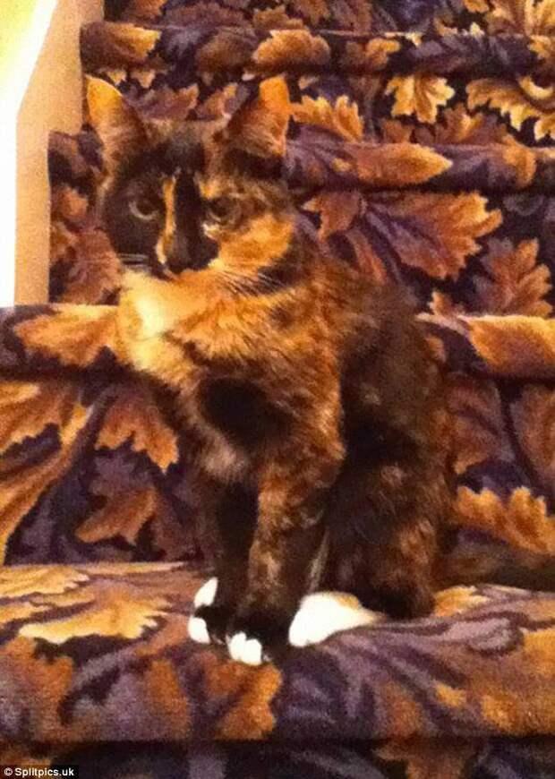 15. Кошка под цвет интерьера домашние животные, коты, кошки, маскировка, маскируется, прятки, смешные кошки