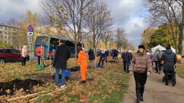На Новоизмайловском проспекте высадили 100 остролистных клёнов – видео