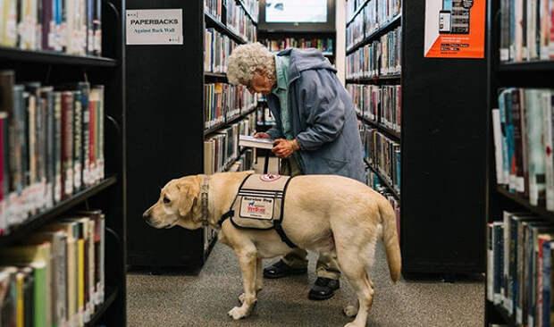 92-летняя ветеран армии США не выходила из дома, пока не познакомилась с этим псом
