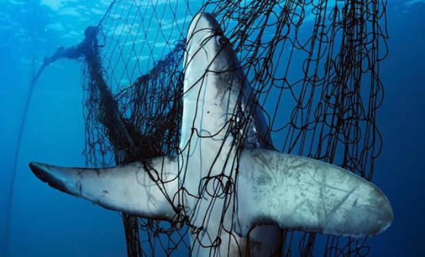 Рыбак помог акуле освободиться от сетей и получил в ответ благодарность: видео