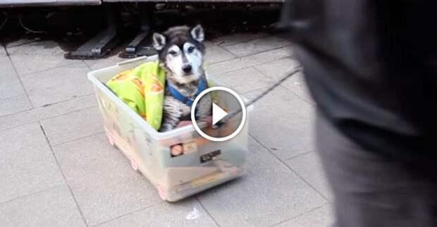 Как ухаживать за пожилим псом