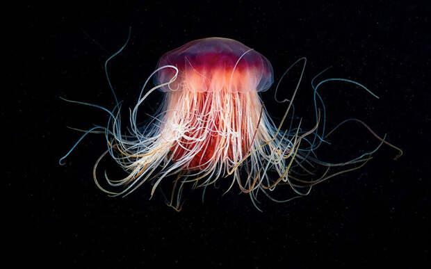 Чудовища морских глубин на фото Александра Семенова
