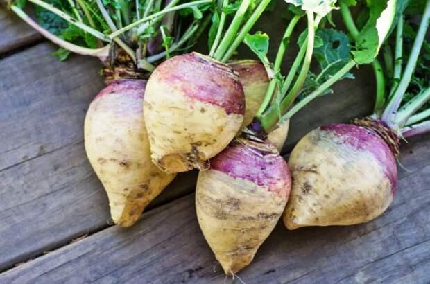 Что выращивали на Руси, пока не появились помидоры с картошкой