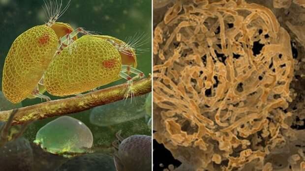 Обнаружена самая старая сперма в мире: ей 100 миллионов лет