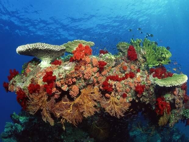 Кораллы животные, красота, океан