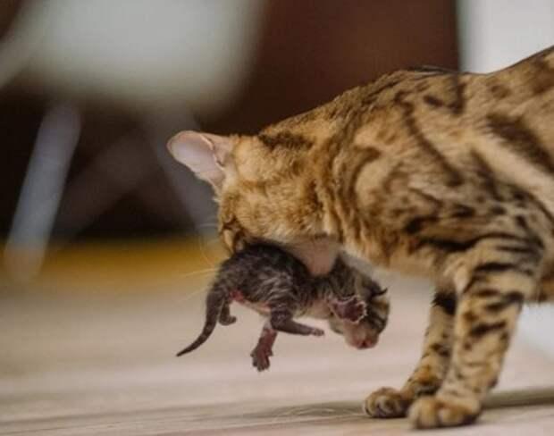 Увидев, что недавно окотившаяся кошка уходит, мама заглянула в домик и обомлела