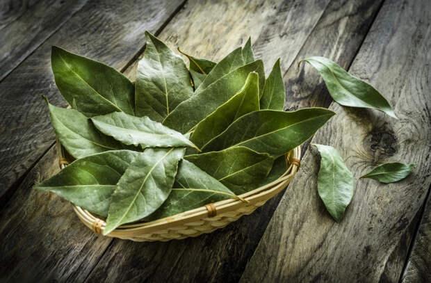 Чего мы не знали о лавровых листьях