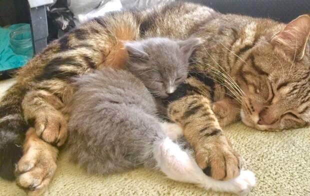 Кот находит подход к котёнку-сироте и приучает его обниматься каждый день