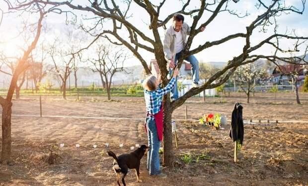 Как омолодить старую яблоню – полезные советы для начинающих