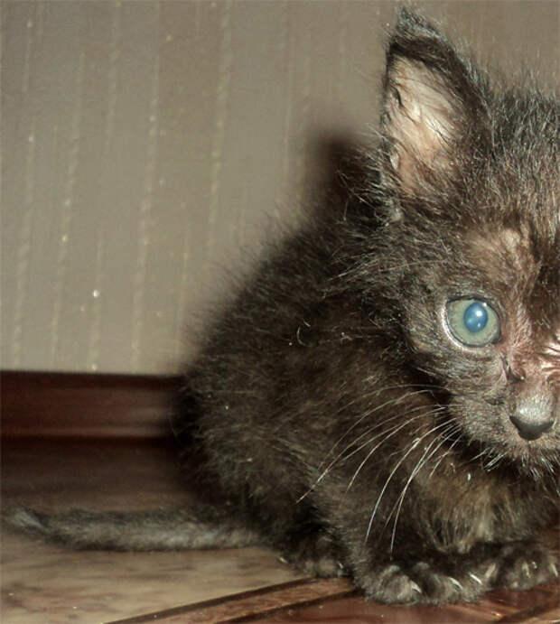 Увидели на улице котенка, который чудом остался жив...