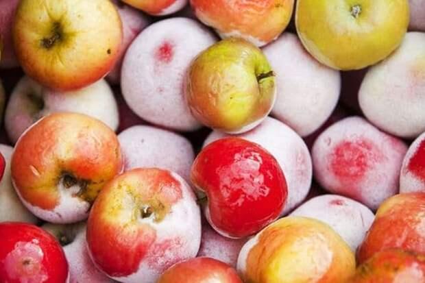 Замороженные яблоки на зиму