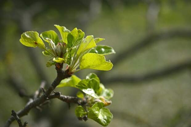 Народные приметы 19 апреля: что нельзя и что можно делать в День Евтихия