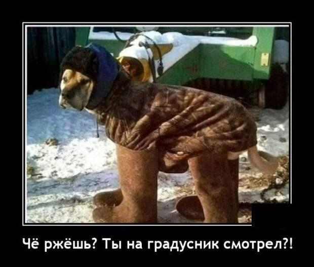 Демотиватор про холод