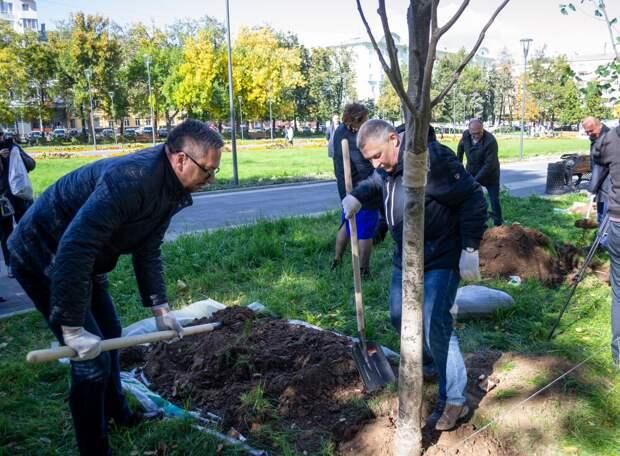 В сквере на площади Горького высадили 30 новых деревьев