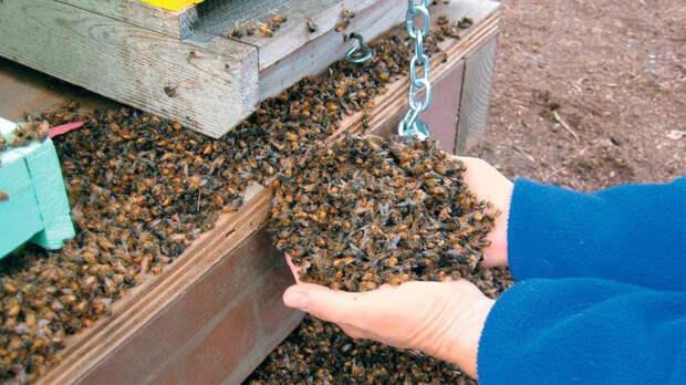 Следователи начали проверку из-за массовой гибели пчел