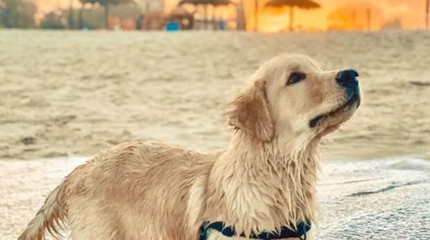 Любой другой пёс держался бы подальше, но не храбрый ретривер! Увидев водную горку, он решил прокатиться