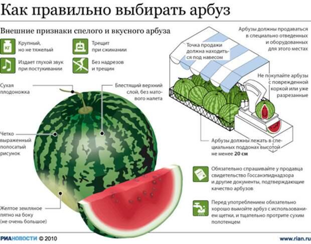 Инфографика: Как правильно выбирать арбуз
