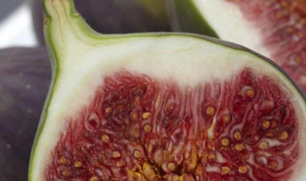Ученые из России нашли в инжире заменяющее антибиотики вещество