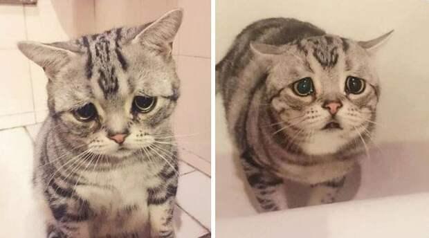 Без кота и жизнь не так! А с котом… смотрите сами