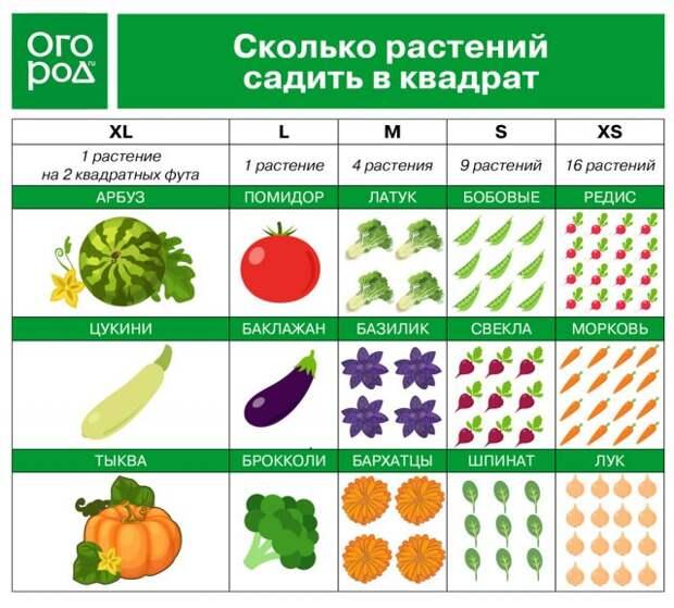 Сколько растений садить в квадрат
