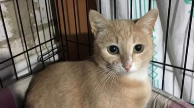 Бездомная беременная кошка прокралась в подъезд и родила котят в детской коляске