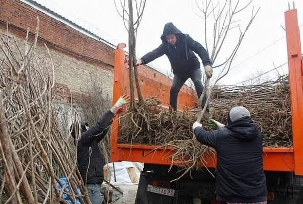Жителям Краснодара раздали более 12 тысяч саженцев