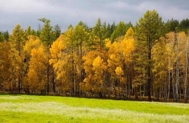 осень Алтачейский заказник