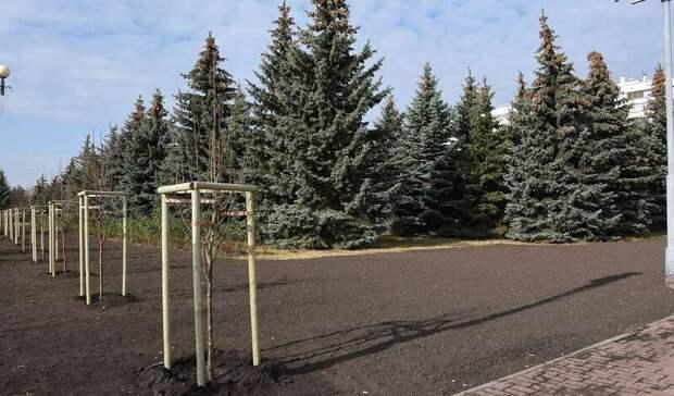 Серебристые тополя мужского пола высадили в центре Белгорода