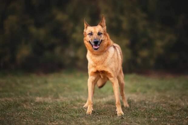 Как пес, которого хотели повесить, начал новую жизнь