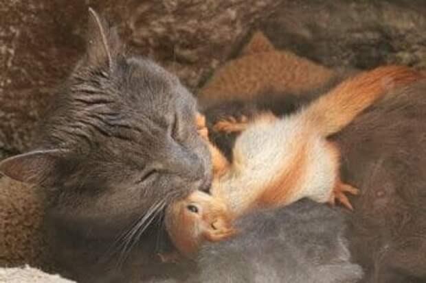 Серая кошка после появления котят начала уходить в лес, причина была веская
