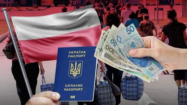 Сколько платят украинцам в Польше на сборе клубники и другой неквалифицированной работе