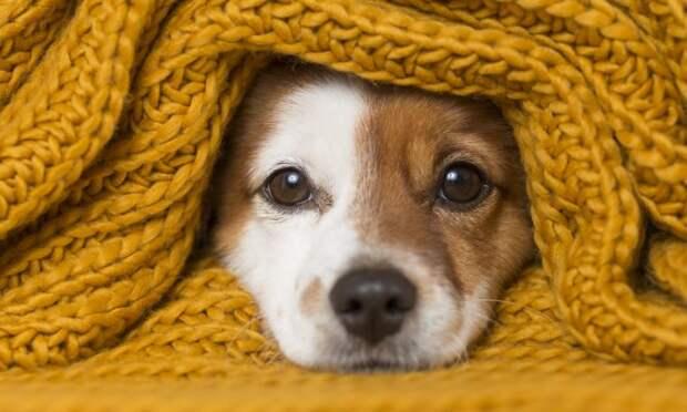 Холод собачий: 10 пород собак, которые сильно мерзнут зимой