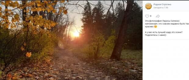 Фото дня: осенний закат в Строгине