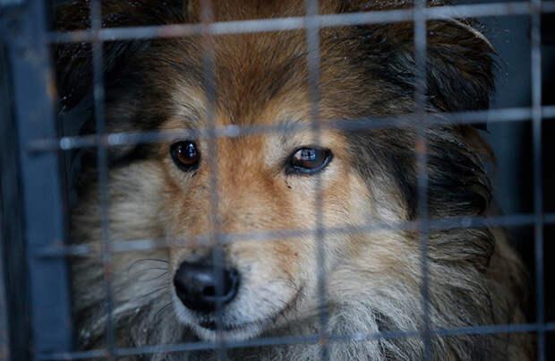 Поправки о штрафах за жестокое обращение с животными направили в кабмин на рассмотрение