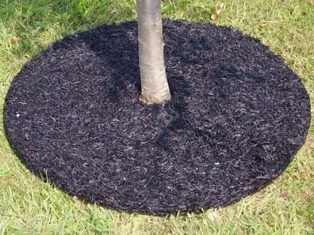 Залог большого урожая у плодовых деревьев