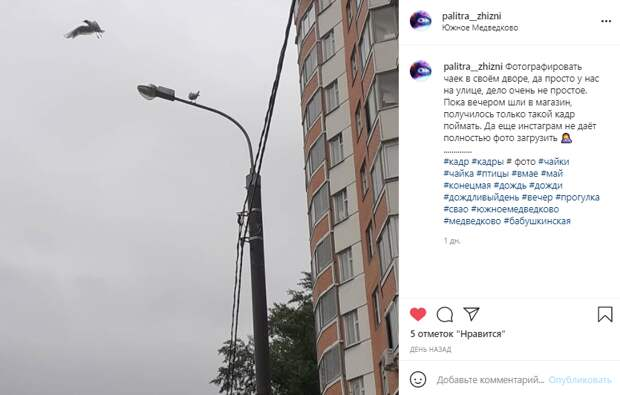 Фото дня: на Полярной заметили чайку