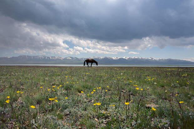 Мир и гармония на озере Сонкель, Кыргызстан красота, путешествия, фото