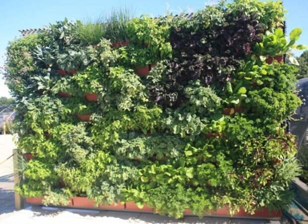 зеленая стена в рамке