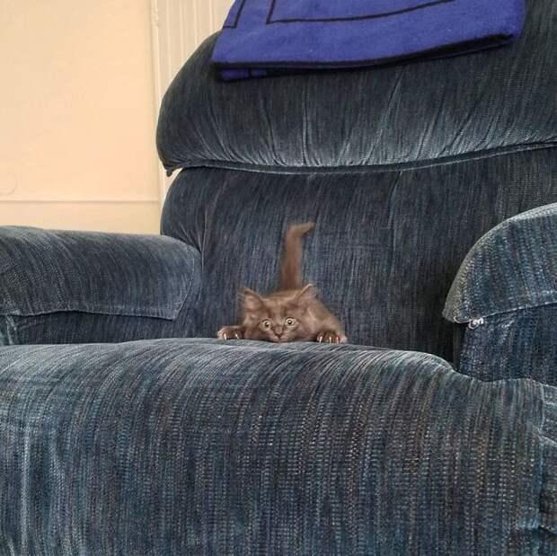 Дюжина смешных котят, которые из засады напасть хотят! Получается пока не очень…