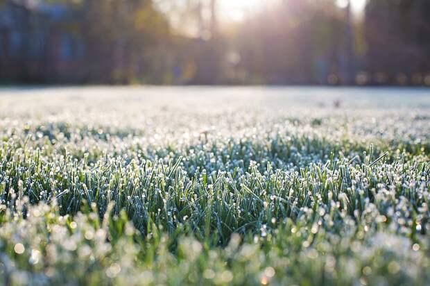 Ниже нуля: в ряде регионов России ожидаются летние заморозки
