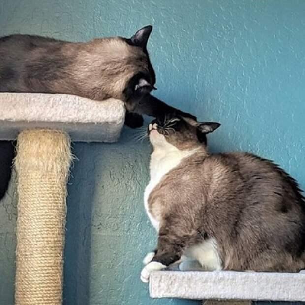 Игривые коты