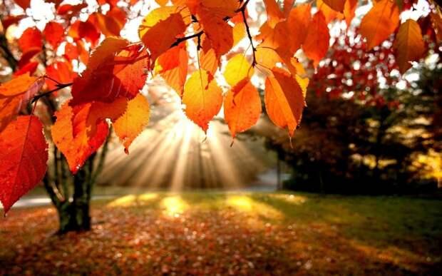 Осенняя песнь. Октябрь