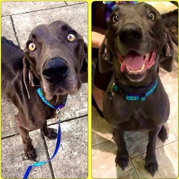 Истощённый пёс Алекс смог выжить и найти себе братьев и любящую хозяйку!